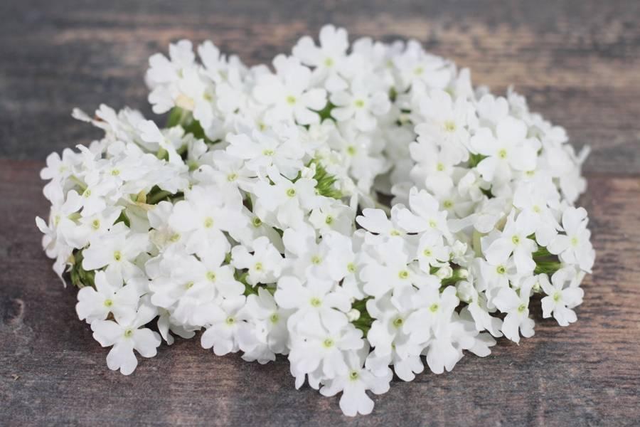 Fleurs de Verveine - EARL Chevet - La Ruche qui dit Oui ! à la maison