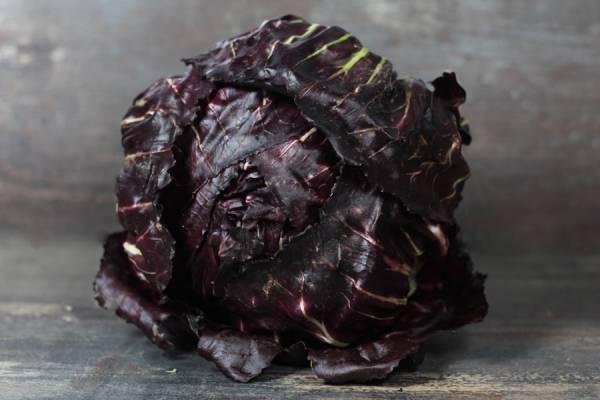 Salade Rouge de Vérone - Le Potager d'Olivier