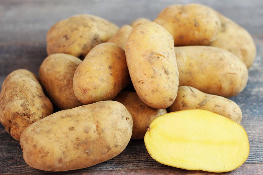 Pomme de terre Ditta BIO - Ferme de Chatenoy - La Ruche qui dit Oui ! à la maison