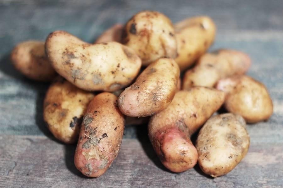 Pomme de terre grenaille rose BIO - Les Légumes de Laura - La Ruche qui dit Oui ! à la maison
