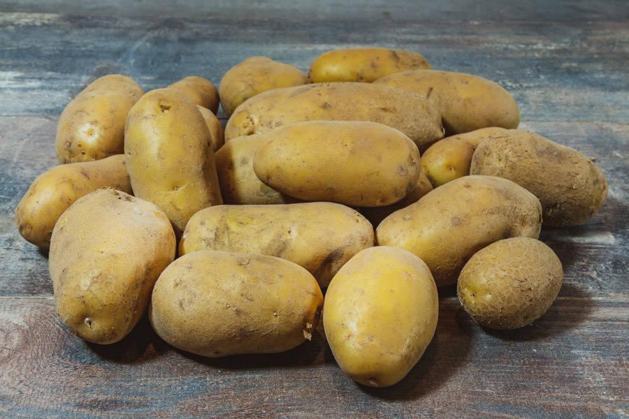 Pomme de Terre Agria BIO - Les Légumes de Laura - La Ruche qui dit Oui ! à la maison