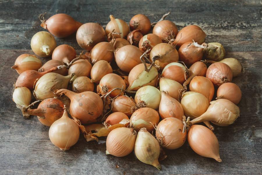 Petits Oignons Jaunes - Le Potager d'Olivier - La Ruche qui dit Oui ! à la maison