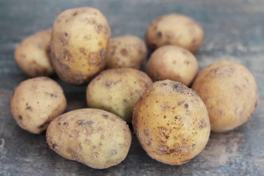 Pomme de terre Vitabella BIO - Les jardins de Courances - La Ruche qui dit Oui ! à la maison