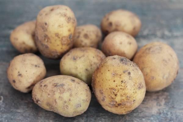 Pomme de terre BIO - Les jardins de Courances