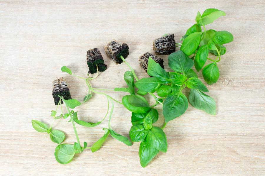 Lot de 5 semis - Hydropousse - La Ruche qui dit Oui ! à la maison