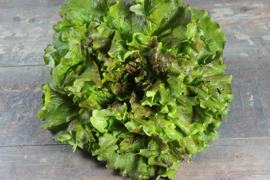 Batavia rouge ou verte BIO - Les Légumes de Laura - La Ruche qui dit Oui ! à la maison