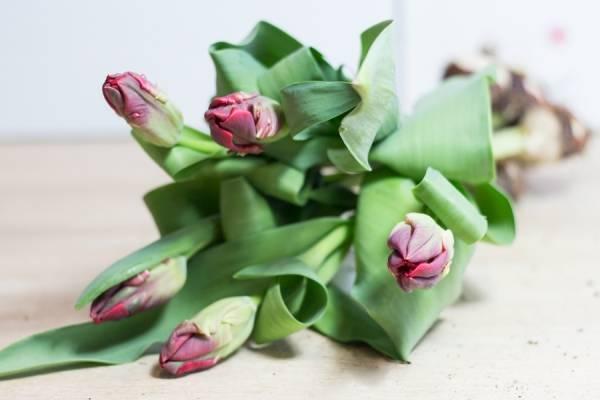 Tulipe à bulbe Weber - Bouquet de 5 - Des roses dans mon jardin