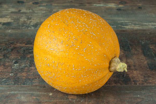Courge melonette - Les Légumes de Laura