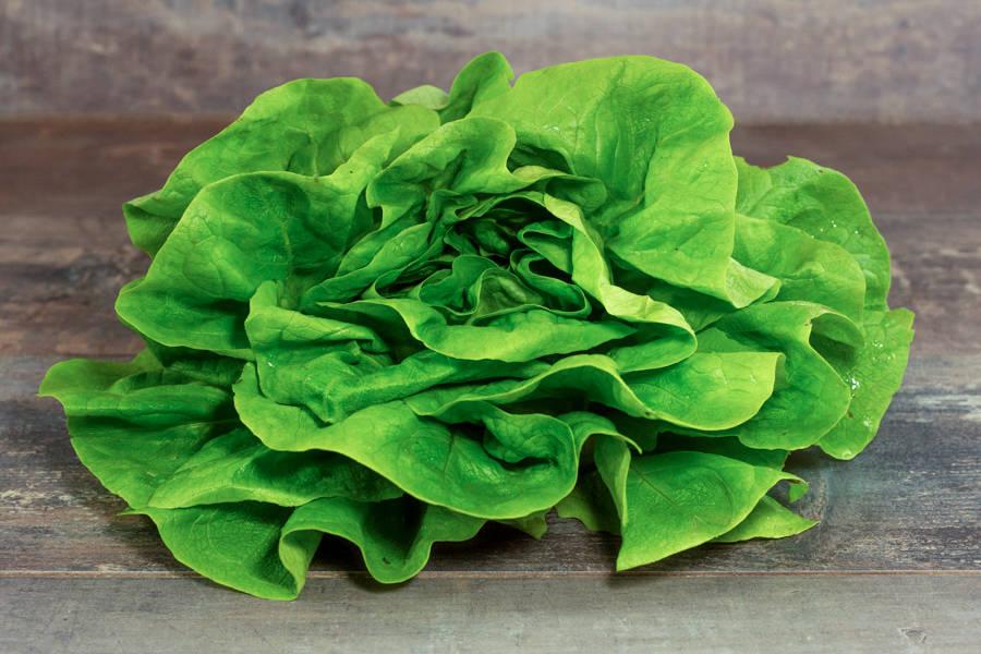 Laitue BIO - Les Légumes de Laura - La Ruche qui dit Oui ! à la maison