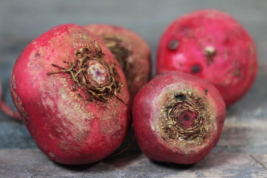 Betteraves Chioggia crue  (en conversion BIO) - Les Légumes de Planche - La Ruche qui dit Oui ! à la maison