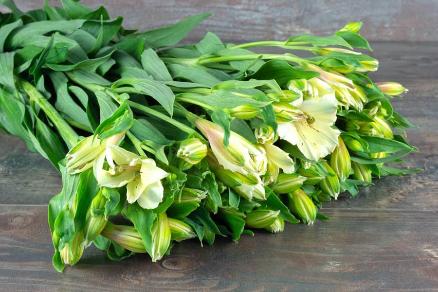 Alstroemerias blancs - EARL Mangini - La Ruche qui dit Oui ! à la maison