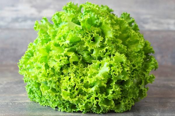 Batavia verte BIO - Les Légumes de Planche
