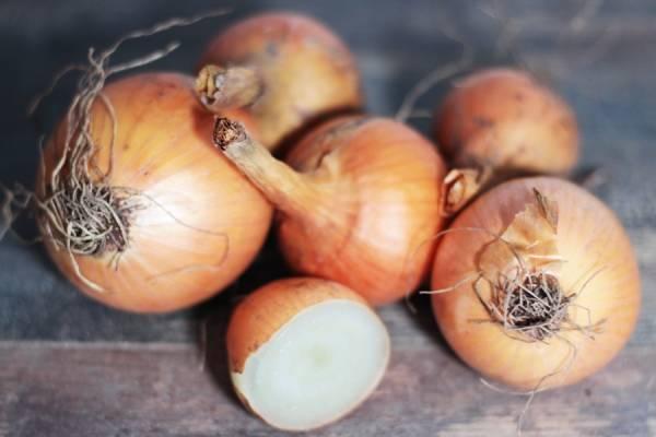 Oignons sturon BIO - Les potagers de Marcoussis
