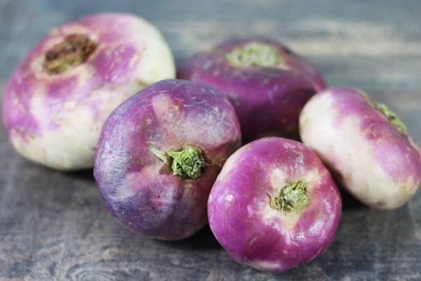 Navet violet BIO - Les Potagers du Télégraphe