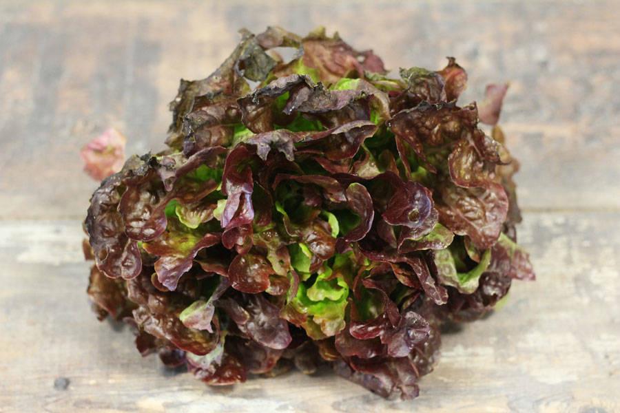 Feuille de chêne rouge ou verte BIO - Les Légumes de Laura - La Ruche qui dit Oui ! à la maison
