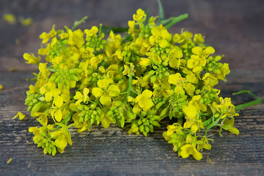 Fleur de moutarde - Aéromate - La Ruche qui dit Oui ! à la maison
