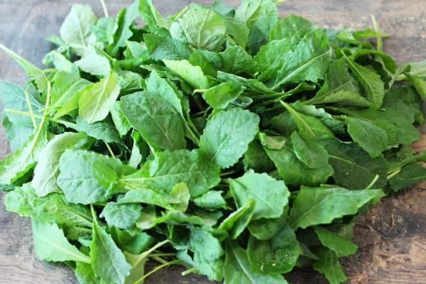 Pousse de Kale - Beausse