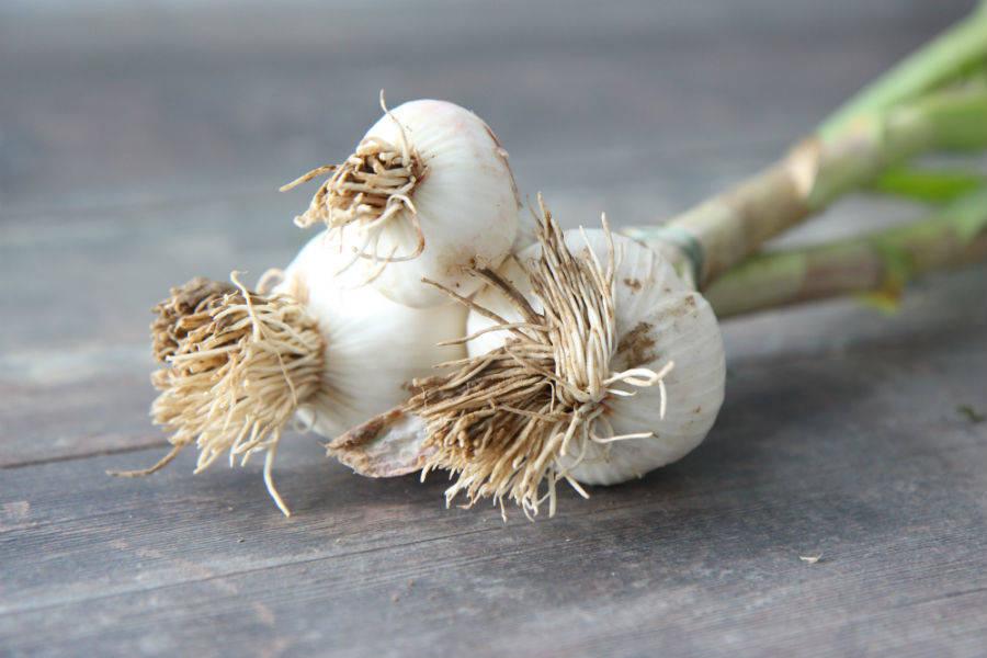 Botte d'ail BIO - Les Légumes de Planche - La Ruche qui dit Oui ! à la maison