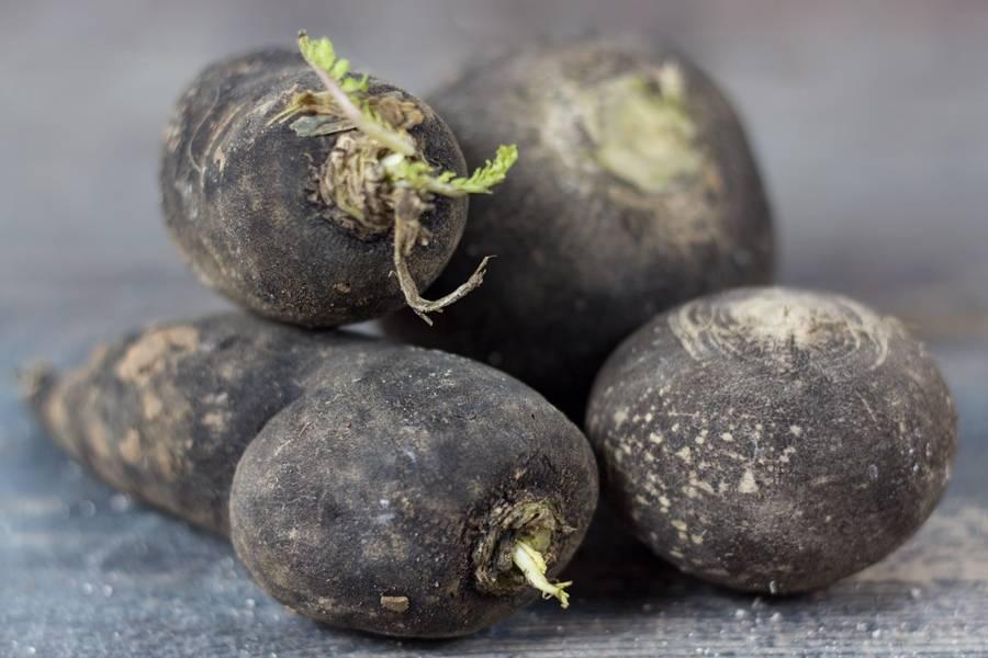 Radis Noir long - Le Potager d'Olivier - La Ruche qui dit Oui ! à la maison