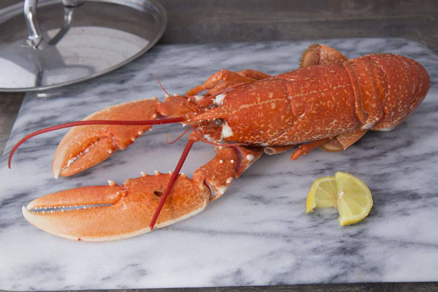 Homard cuit - Ô'poisson - La Ruche qui dit Oui ! à la maison