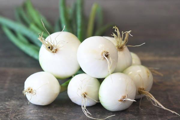 Botte d'oignons blancs BIO - SCEA Koorin - Le Comptoir Local