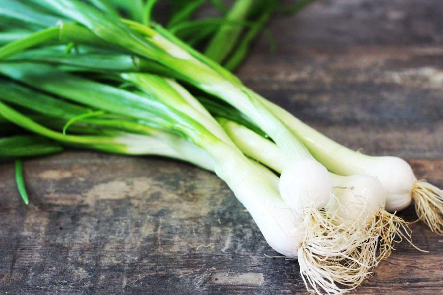 Oignons blancs nouveaux BIO - Le Potager de la Grenouillère - La Ruche qui dit Oui ! à la maison
