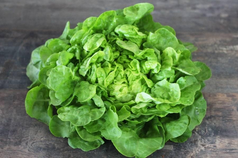 Salade BIO - Les Potagers du Télégraphe - La Ruche qui dit Oui ! à la maison