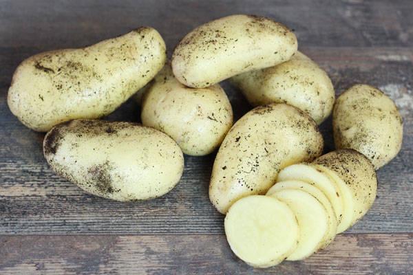 Pomme de terre Celtiane - Ferme de la Concie