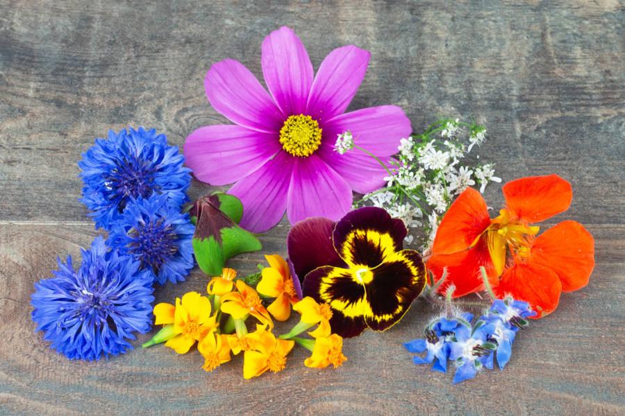 Mélange de fleurs comestibles - La Belle Pousse - La Ruche qui dit Oui ! à la maison