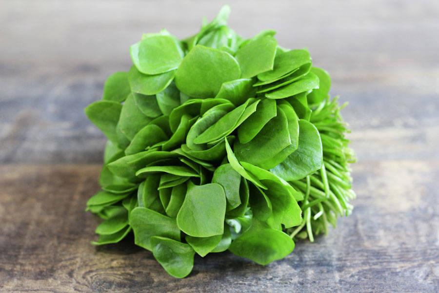 Salade pourpier BIO - SCEA Koorin - La Ruche qui dit Oui ! à la maison