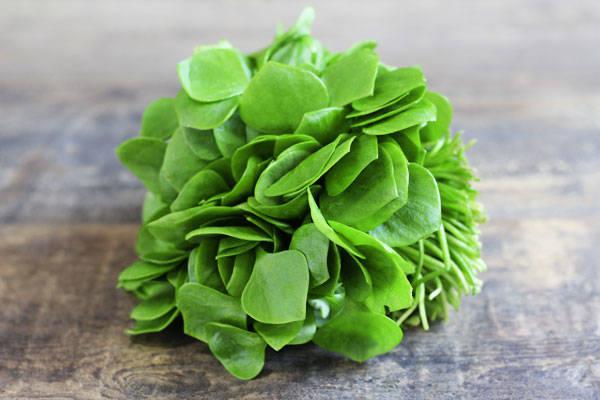Salade pourpier BIO - SCEA Koorin