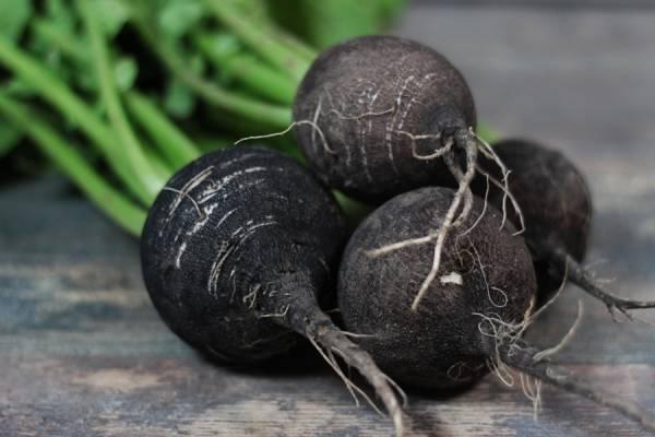 Radis noir BIO - Le Clos de Nonville
