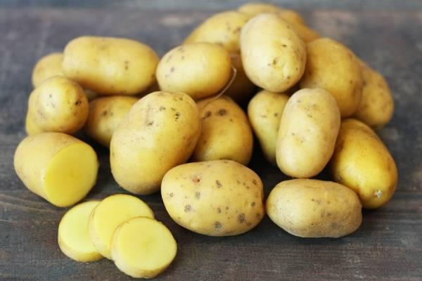 Pomme de terre Ditta BIO - Le Potager de la Grenouillère