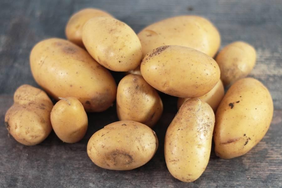 Pomme de Terre Margot BIO - Les Potagers du Télégraphe - La Ruche qui dit Oui ! à la maison