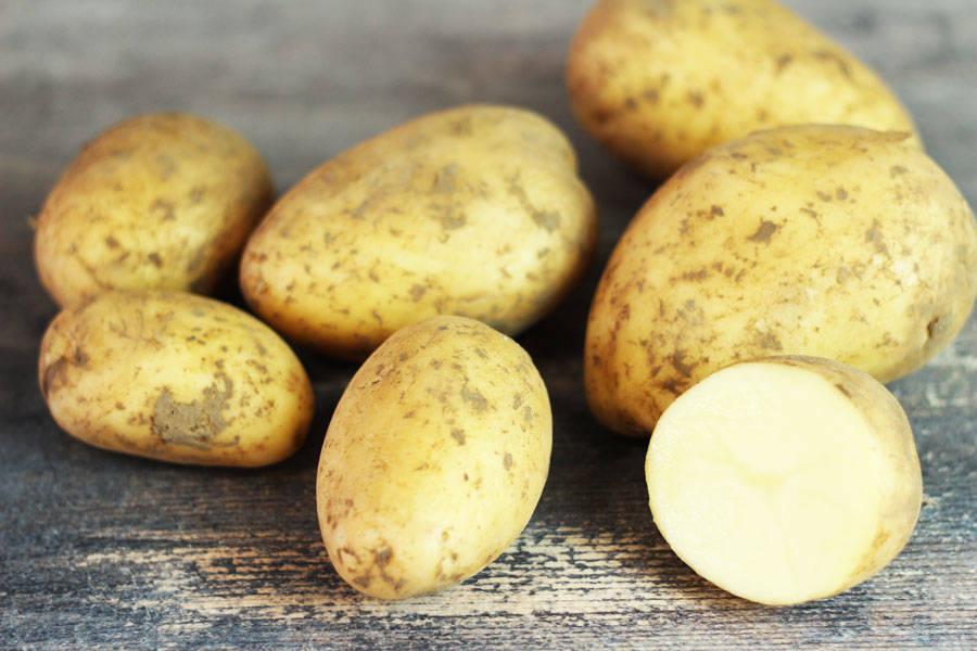 Pomme de terre Monalisa - Ferme de la Concie - La Ruche qui dit Oui ! à la maison