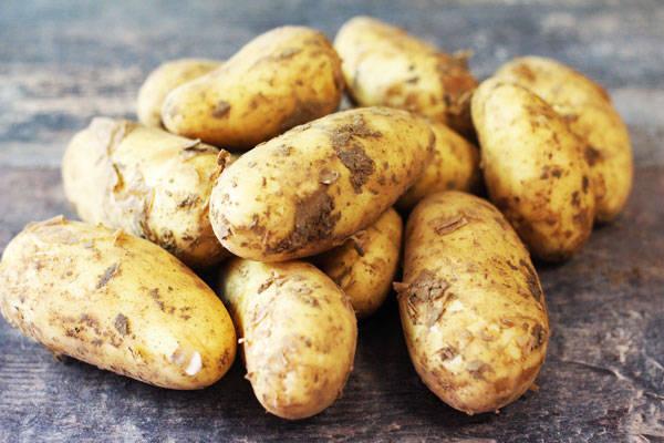 Pomme de terre nouvelle - Le Potager d'Olivier