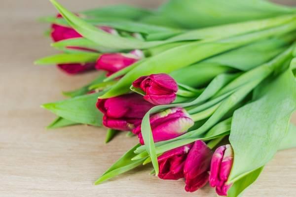 Tulipes à bulbe Cerise - Bouquet de 10 - Des roses dans mon jardin