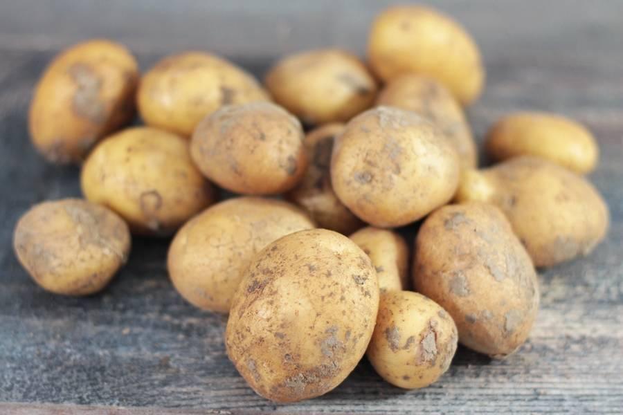 Mélange de pommes de terre nouvelles BIO - Les jardins de Courances - La Ruche qui dit Oui ! à la maison