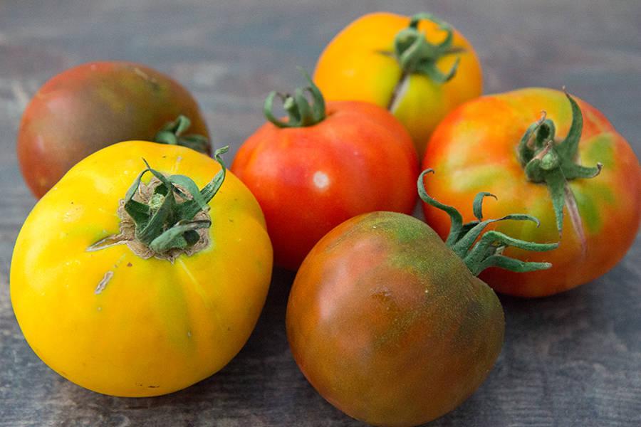 Assortiments de tomates BIO - Ferme Lafouasse - La Ruche qui dit Oui ! à la maison