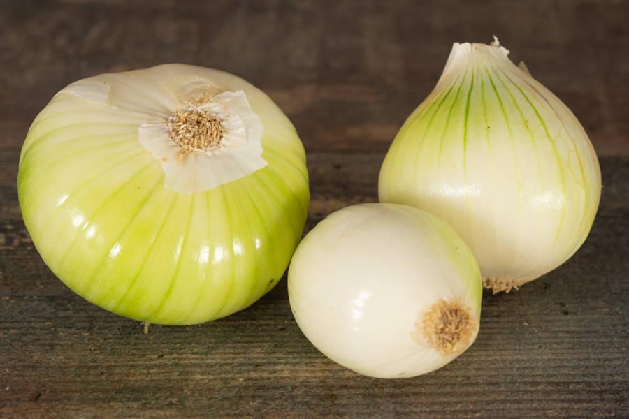 Oignons blancs (en conversion BIO) - Les Légumes de Planche - La Ruche qui dit Oui ! à la maison