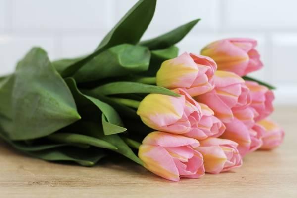 Tulipes roses - Eric Fontyn