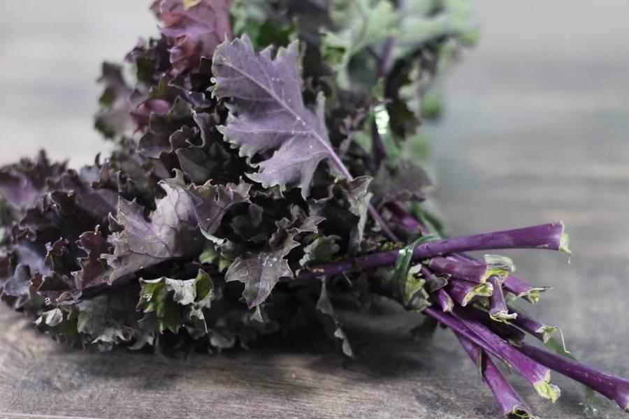 Chou kale violet BIO - Les Légumes de Planche - La Ruche qui dit Oui ! à la maison