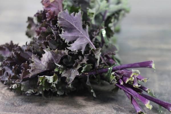 Chou kale violet BIO - Les Légumes de Planche
