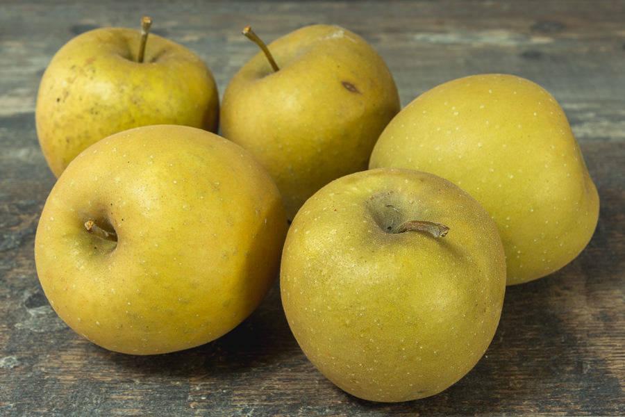 Pomme Bertanne - Vergers de Pomamour - La Ruche qui dit Oui ! à la maison