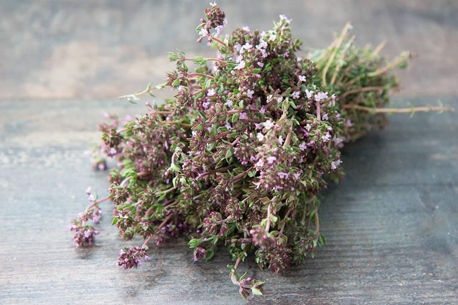 Botte de thym BIO - Les Légumes de Planche - La Ruche qui dit Oui ! à la maison