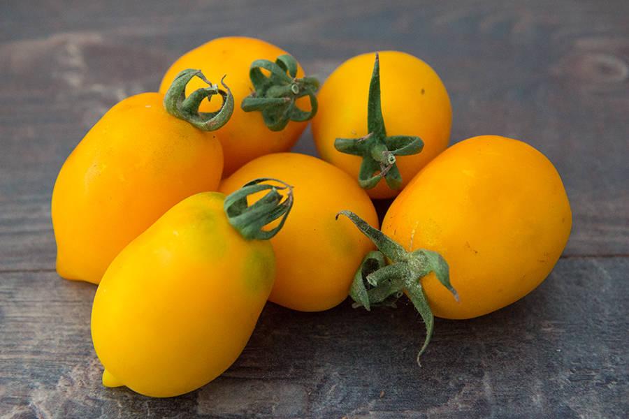 Tomates jaunes BIO - Les Légumes de Laura - La Ruche qui dit Oui ! à la maison