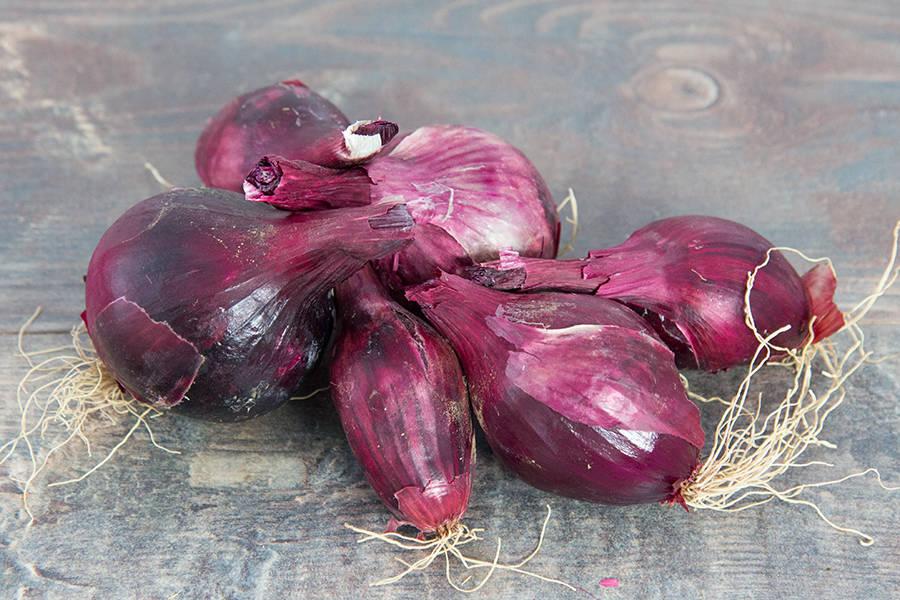 Oignons rouges BIO - Les jardins d'Héricourt - La Ruche qui dit Oui ! à la maison