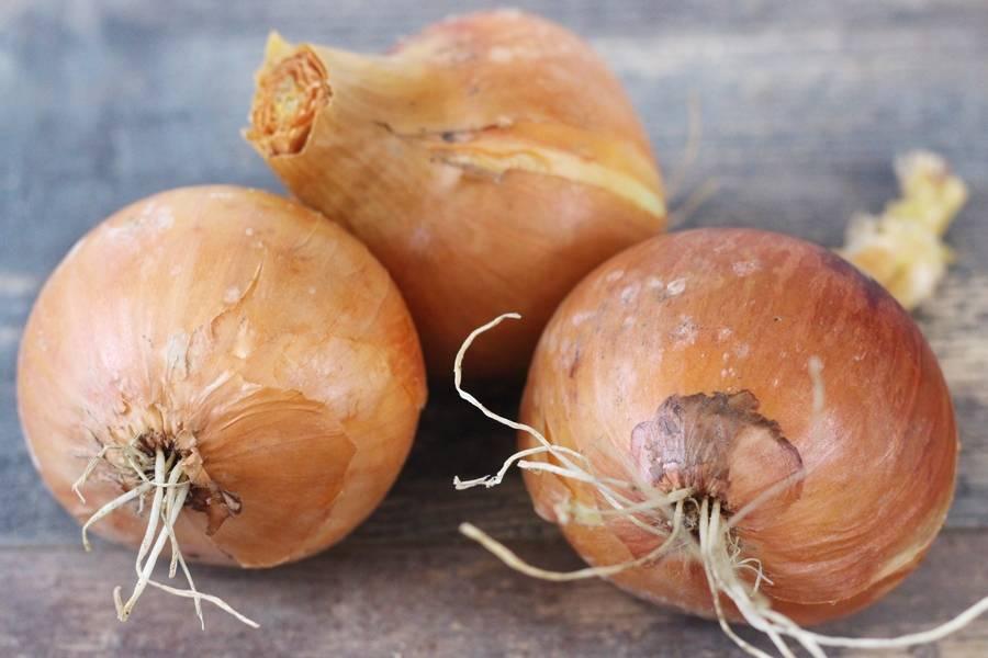Oignons jaunes Bio - Le Potager de la Grenouillère - La Ruche qui dit Oui ! à la maison