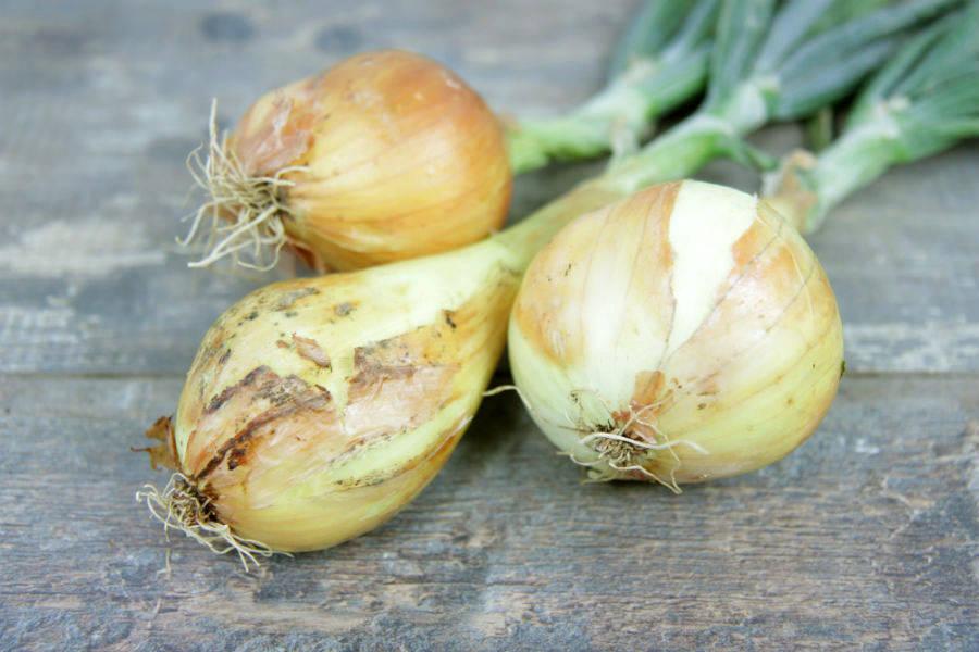 Oignons jaunes frais - Le Potager d'Olivier - La Ruche qui dit Oui ! à la maison