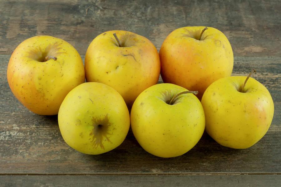 Pomme Primgold BIO - Verger du Grand Morin - La Ruche qui dit Oui ! à la maison